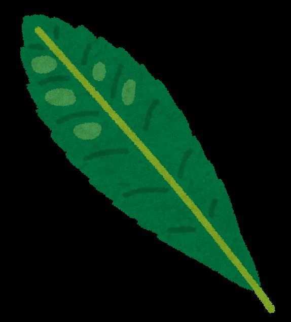 葉 びわ の